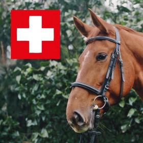 erste_hilfe_pferd